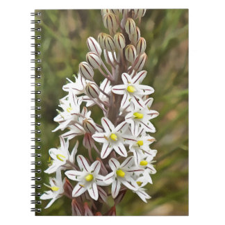 Drimia Maritima Notebooks