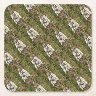 Drimia Maritima Square Paper Coaster