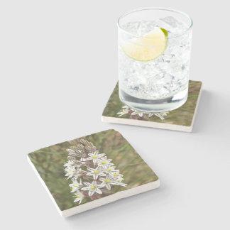 Drimia Maritima Stone Beverage Coaster