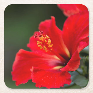 Drink coasters with floral image