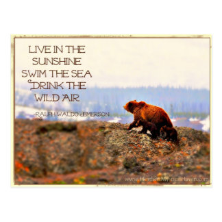 Drink the Wild Air - Emerson Quote Postcard
