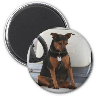 Driving Dog magnet