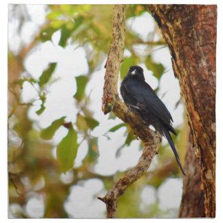 DRONGO BIRD RURAL QUEENSLAND AUSTRALIA NAPKIN