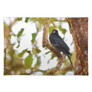 DRONGO BIRD RURAL QUEENSLAND AUSTRALIA PLACEMAT