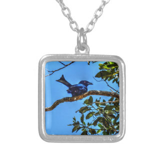 DRONGO RURAL  QUEENSLAND AUSTRALIA ART EFFECTS SILVER PLATED NECKLACE