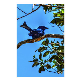 DRONGO RURAL  QUEENSLAND AUSTRALIA ART EFFECTS STATIONERY
