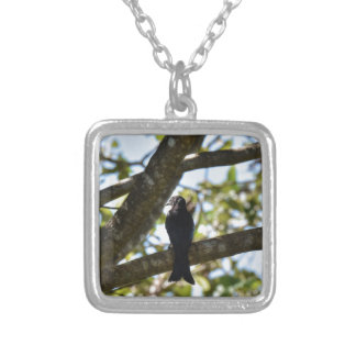 DRONGO RURAL QUEENSLAND AUSTRALIA SILVER PLATED NECKLACE