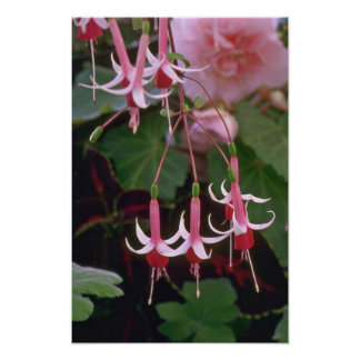 Drooping Flowers Poster