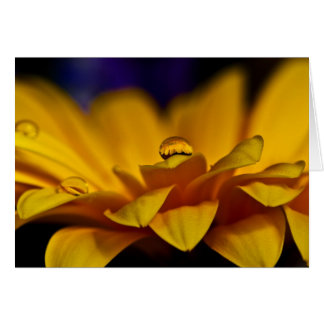 Drop of Water with Reflection of Gerbera Daisy Card