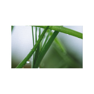 Drop on blade of grass canvas print