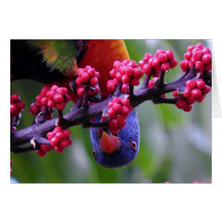Dropping in for a snack - Rainbow Lorikeet Card