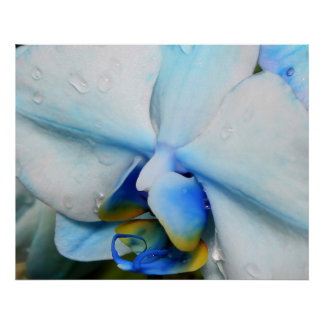 Drops on Blue Orchid Poster