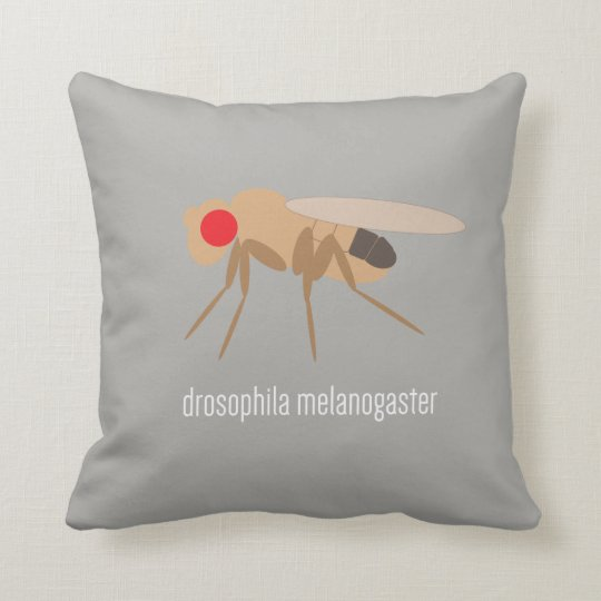 Drosophila Pillow
