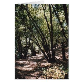 Dry Creek Road Card