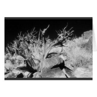 Dry wood landscape card