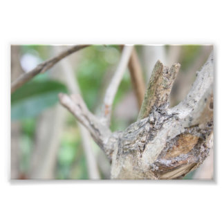Dry Woods Photo Print
