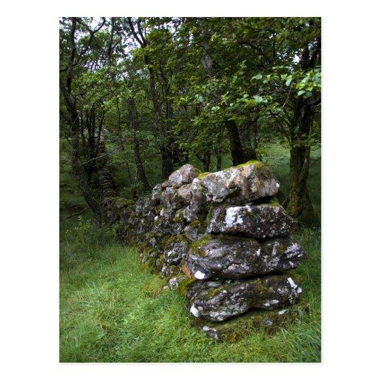 Drystone Wall Postcard