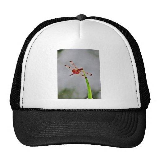 DSC00029.JPG MESH HATS