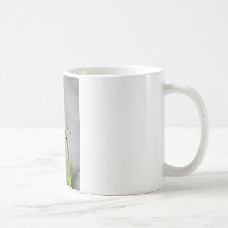 DSC00029.JPG COFFEE MUGS