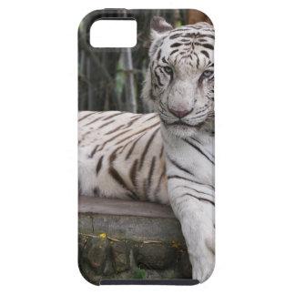 DSC_3158-2 iPhone 5 CASES