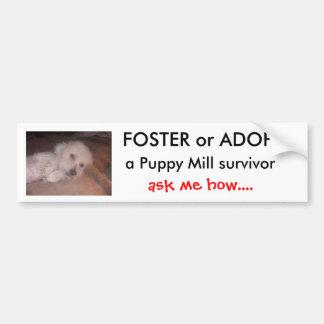 DSCF0636, FOSTER or ADOPT                      ... Bumper Sticker