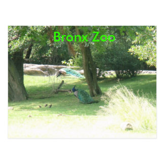 DSCF2638, Bronx Zoo Postcard