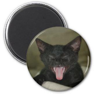 Dubai Kitten-Sticking out his tongue Magnet