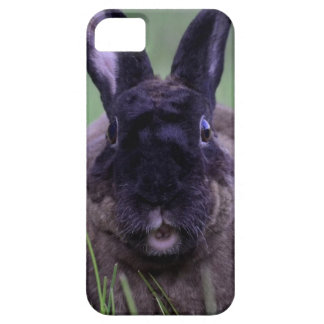 Duchess the Chocolate Bunny iPhone case Case For The iPhone 5