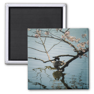 Duck and Cherry Blossoms Japan Magnets