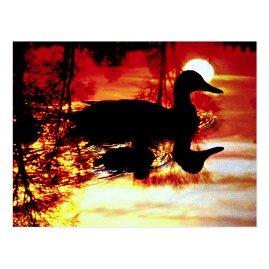 Duck and chick at sunset postcard