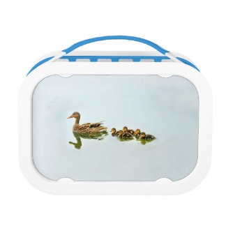 Duck And Ducklings Lunch Box
