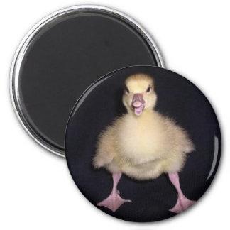 Duck Attitude Magnet
