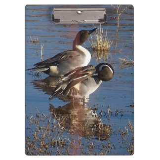 Duck Birds Animals Wildlife Photography Clipboards