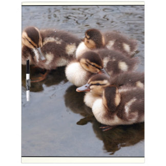 Duck Birds Animals Wildlife Photography Dry-Erase Whiteboards