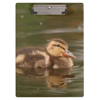 Duck Birds Wildlife Animals Photography Clipboard