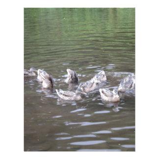 Duck Butts Personalized Letterhead