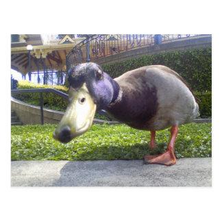 """Duck Encounter"" Postcard"