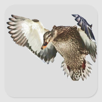 Duck in Flight Square Sticker