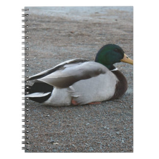 Duck Notebooks