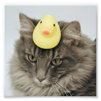 Duck on His Head Photo Print