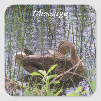 Duck Preening in the Reeds Square Sticker