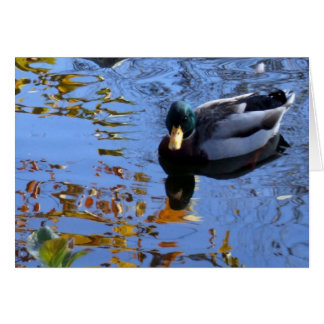 Duck Reflections Card