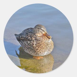 Duck Resting Sticker
