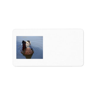 Duck ringed teal beautiful photo blank labels
