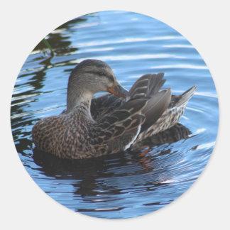Duck Round Sticker