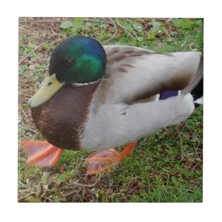 """Duck Small (4.25"""" x 4.25"""") Ceramic Photo Tile"""