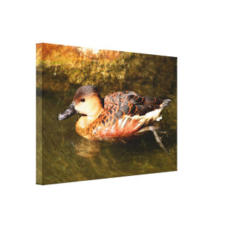Duck swimming at zoo canvas print