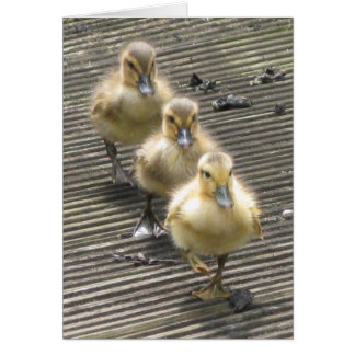 Duck Visitors Card