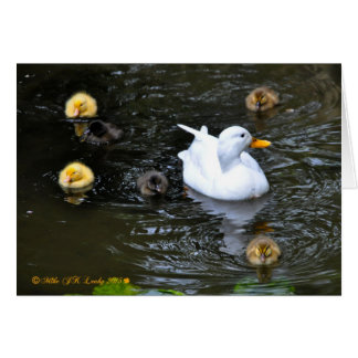 Duck with ducklings greetings card