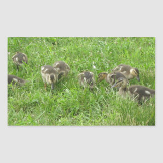 Duckies in the Grass Sticker